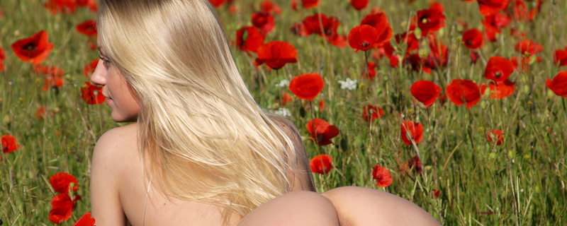 Gerra – Poppy field