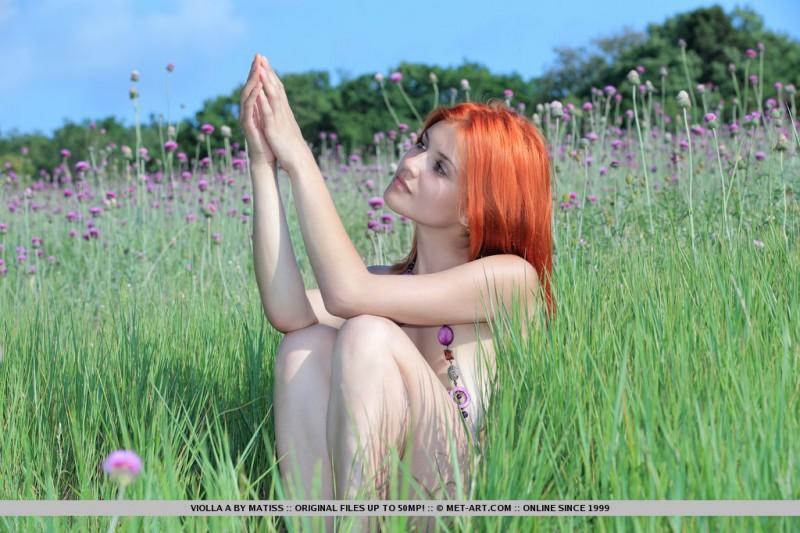 violla-in-meadow-15
