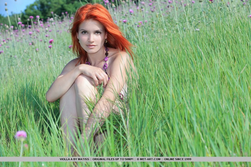 violla-in-meadow-16
