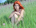 violla-in-meadow