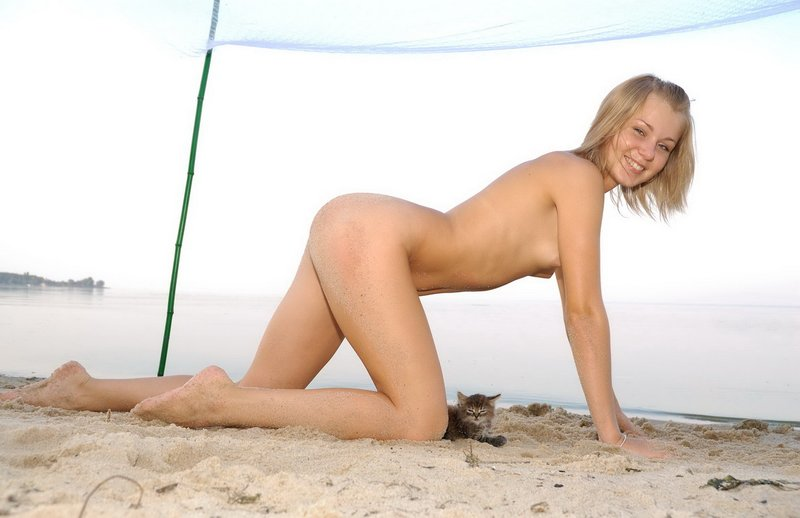 Kitten on the beach