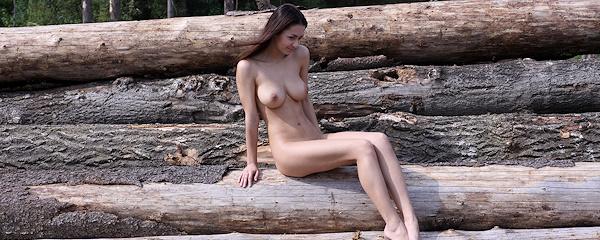 Helga Lovekaty – Felled trees