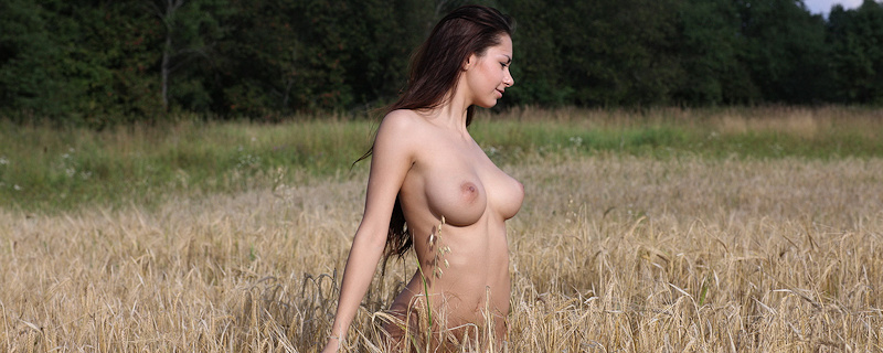 Helga Lovekaty –  Field of grain